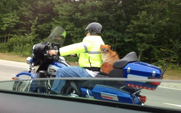 Trooper Joe Chretien and his K9 Moxie-Dream Ride 2014.