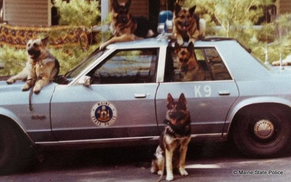 1981- K-9 Training Sebago Lake State Park, ME.